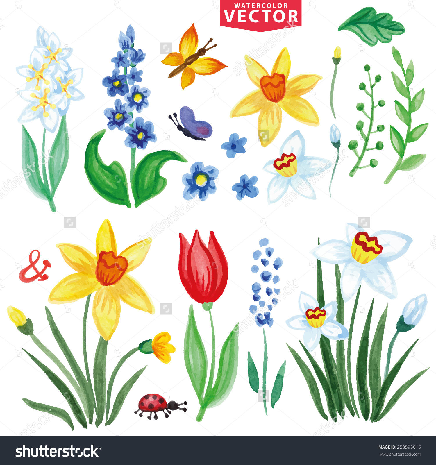 Watercolor Flowers,Insects,Branch.Vintage Floral Vector,Isolated.