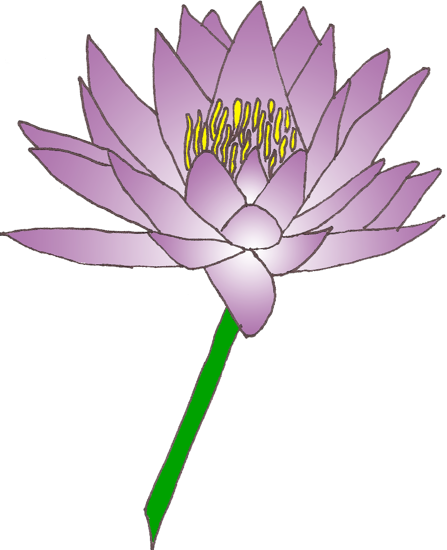 flower lily water clipart clipground