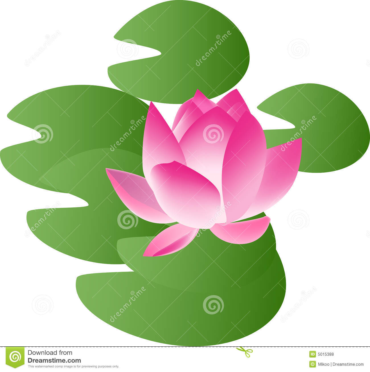 Water Lily Royalty Free Stock Photos.