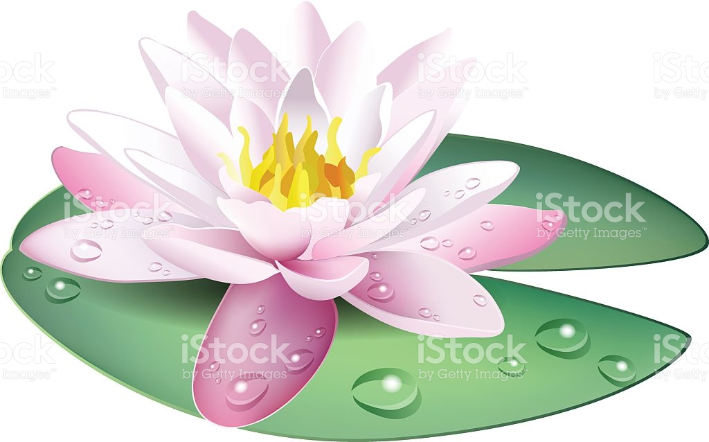 Clip Art Of A Pink And White Water Lily stock vector art 472346037.