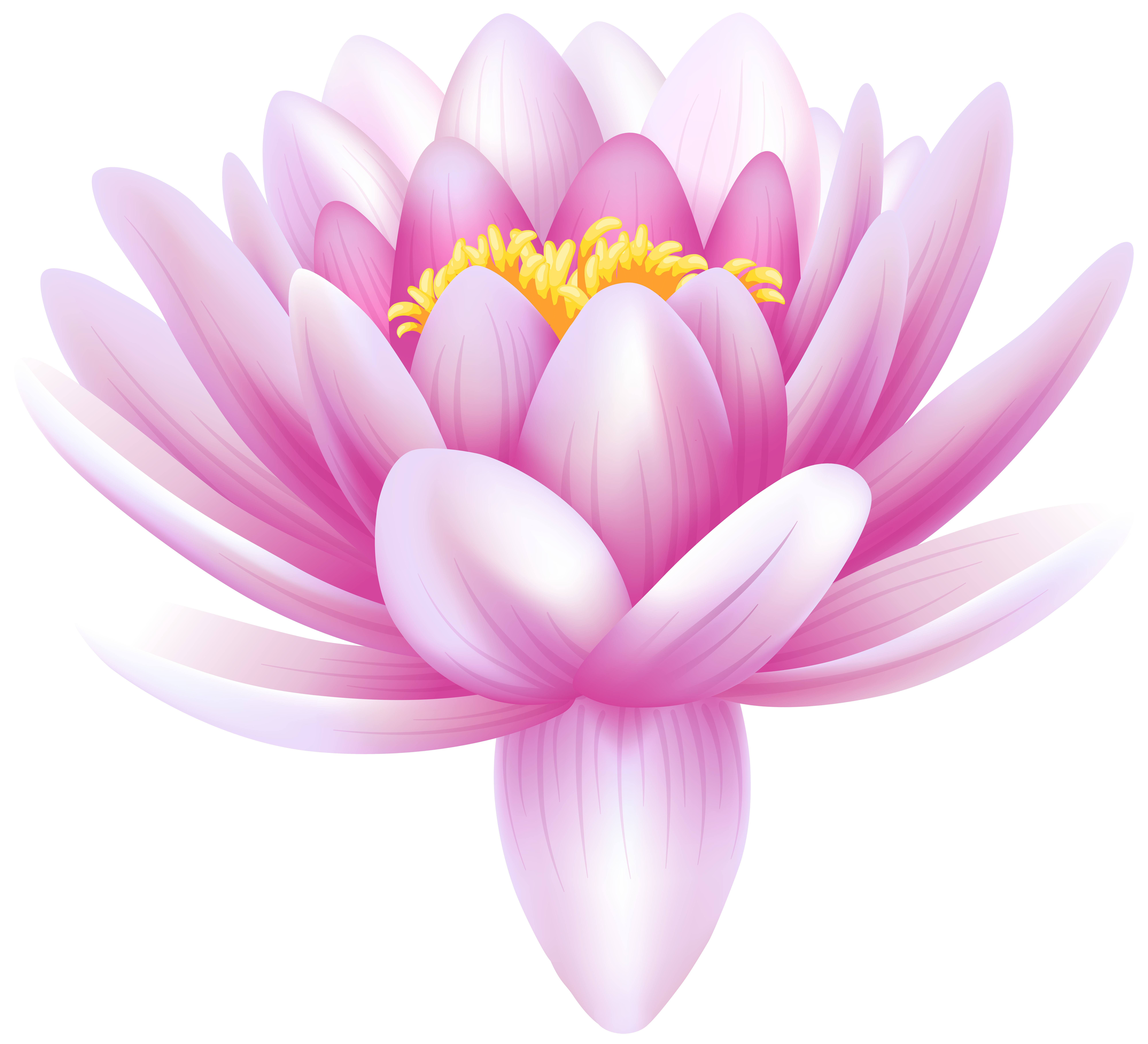 Water Lily Transparent PNG Clip Art Image.