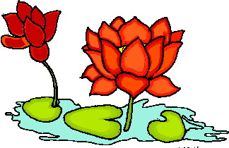 Flower lily water clipart - Clipground