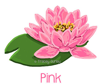waterlily clipart clipground