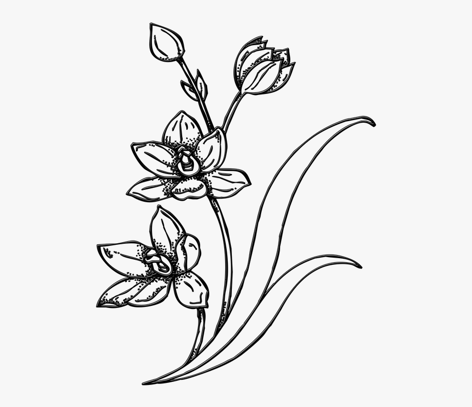 Flowers Line Art 26, Buy Clip Art.