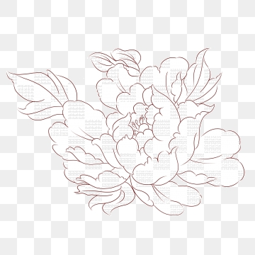Flowers Line Drawing PNG Images.