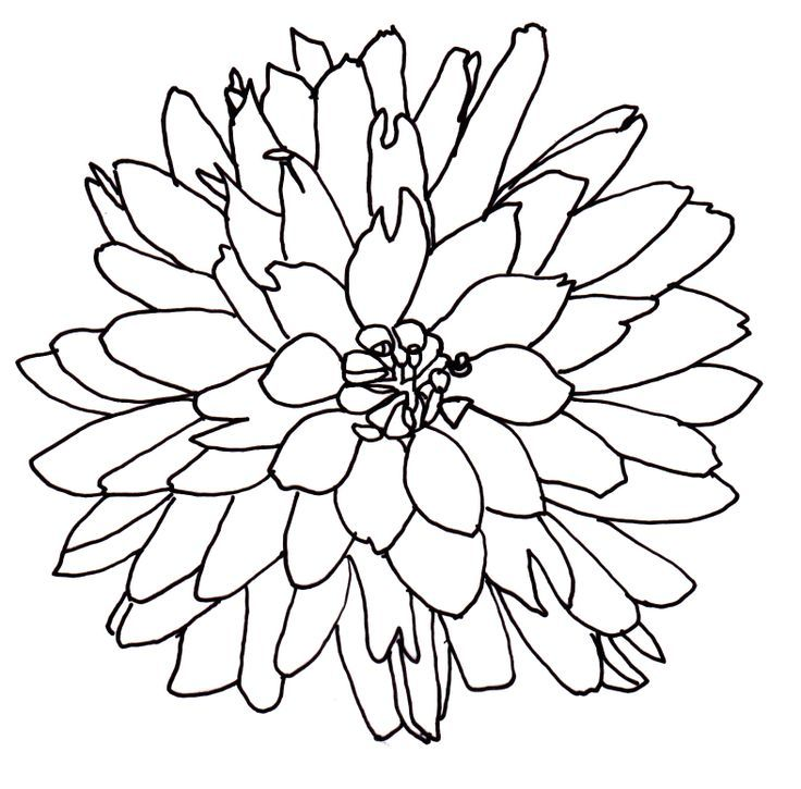 Line Drawing Of A Flower.