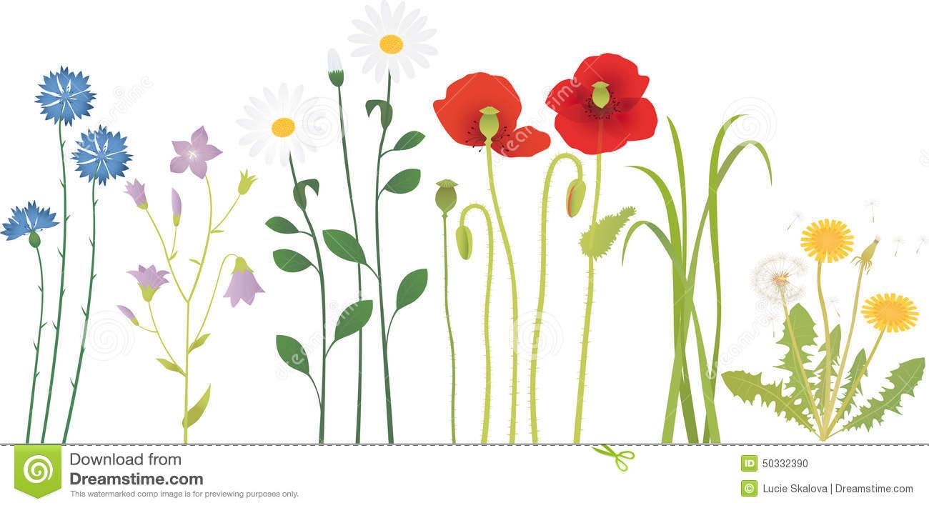 Meadow Flowers Stock Vector.