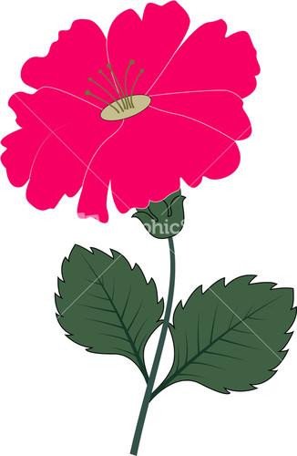 Natural Flower Clipart.