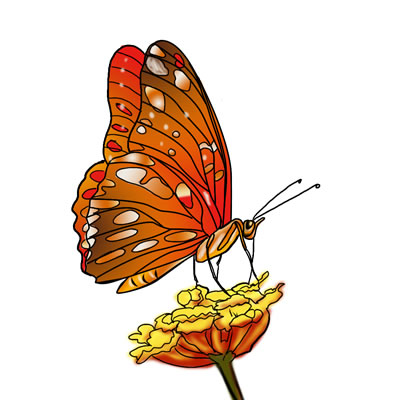 Butterfly feeds on nectar clipart.