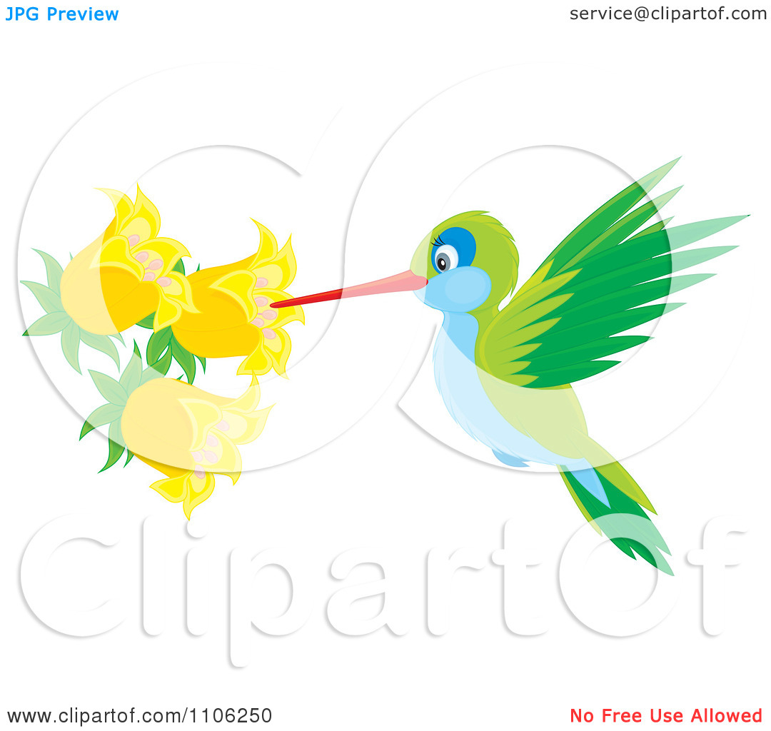 Clipart Green And Blue Hummingbird Sucking Nectar From Yellow Bell.