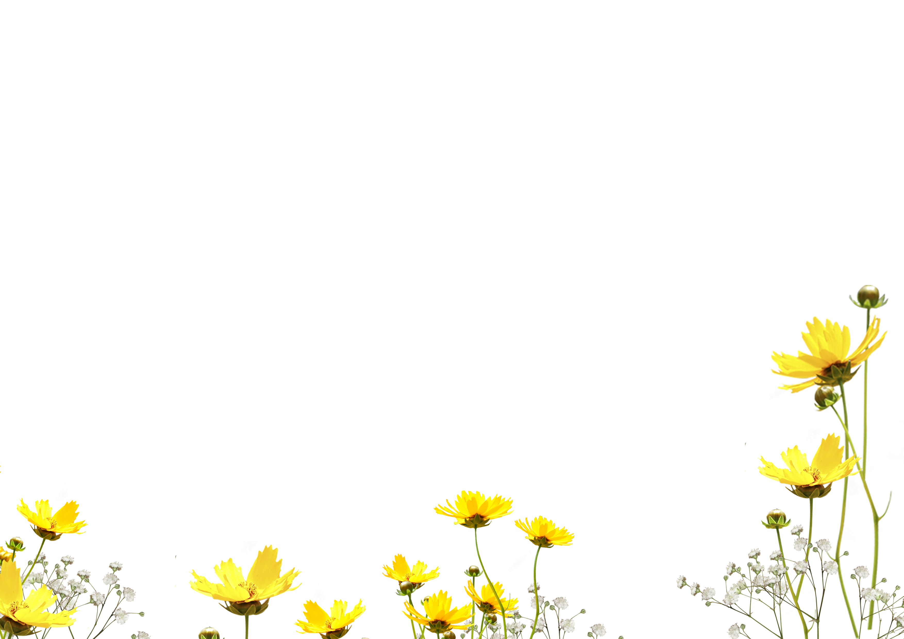 Flower overlay png, Flower overlay png Transparent FREE for.
