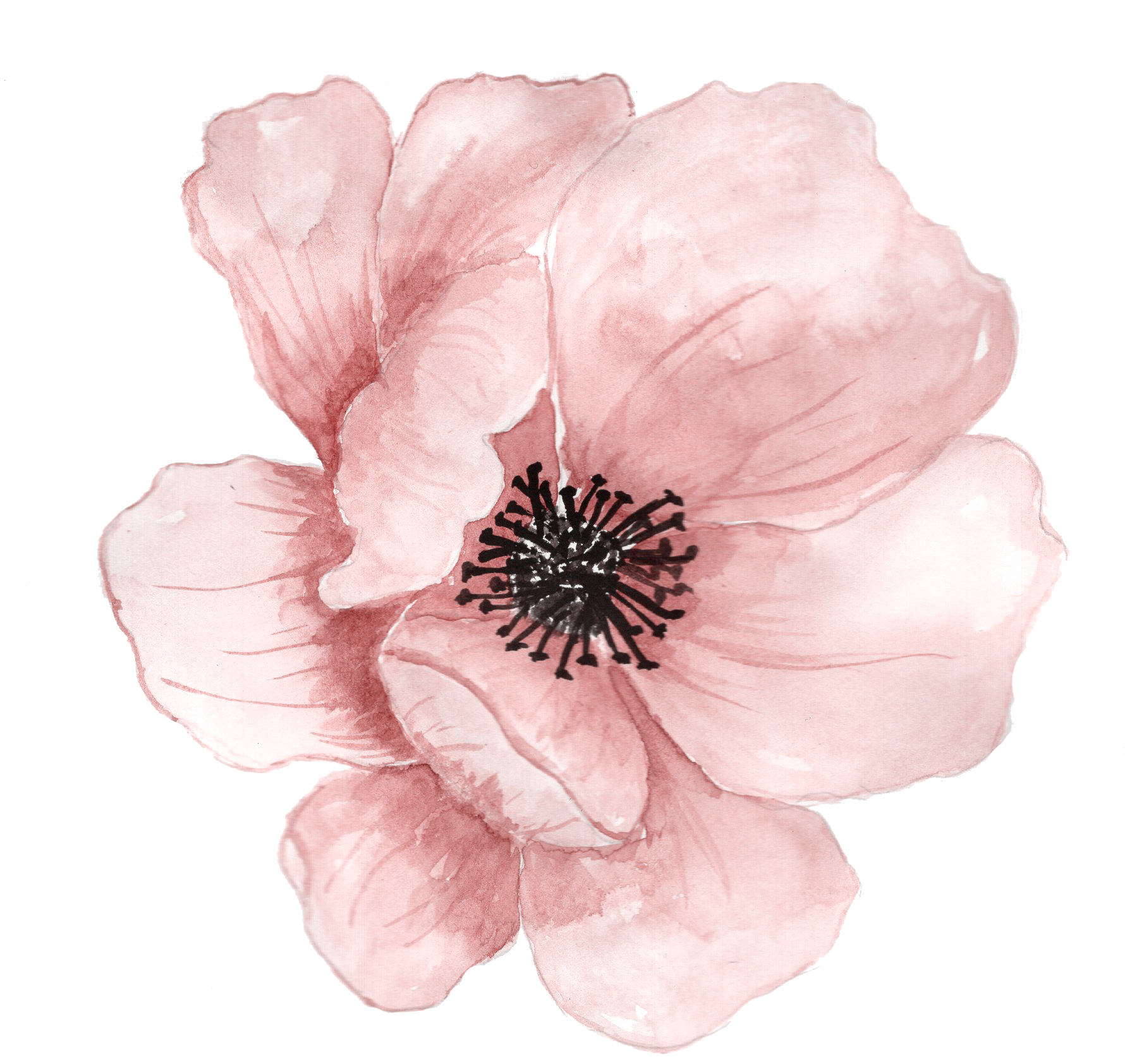 Flower Watercolor painting Clip art.
