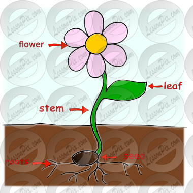 plant parts Picture for Classroom / Therapy Use.