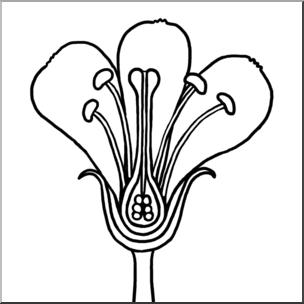 Clip Art: Flower Parts B&W Unlabeled I abcteach.com.