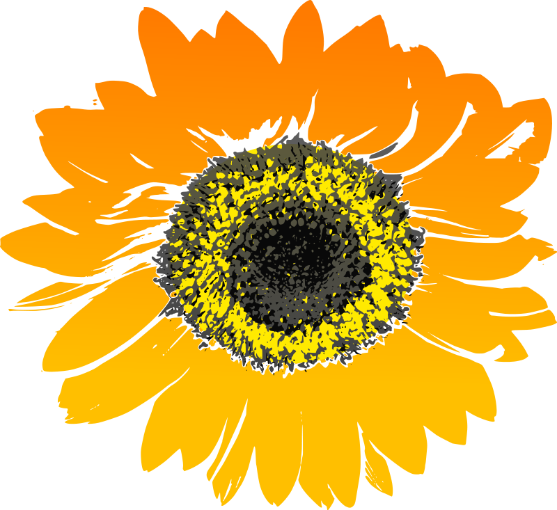 Sunflower Clipart Royalty Free Flower Pictures.