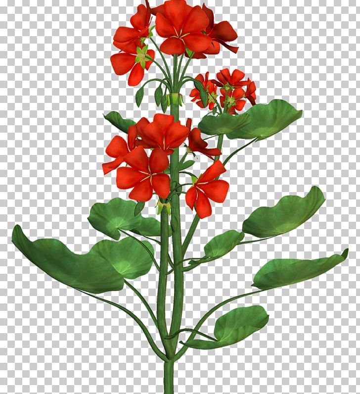 Portable Network Graphics Adobe Photoshop Flower Psd PNG.
