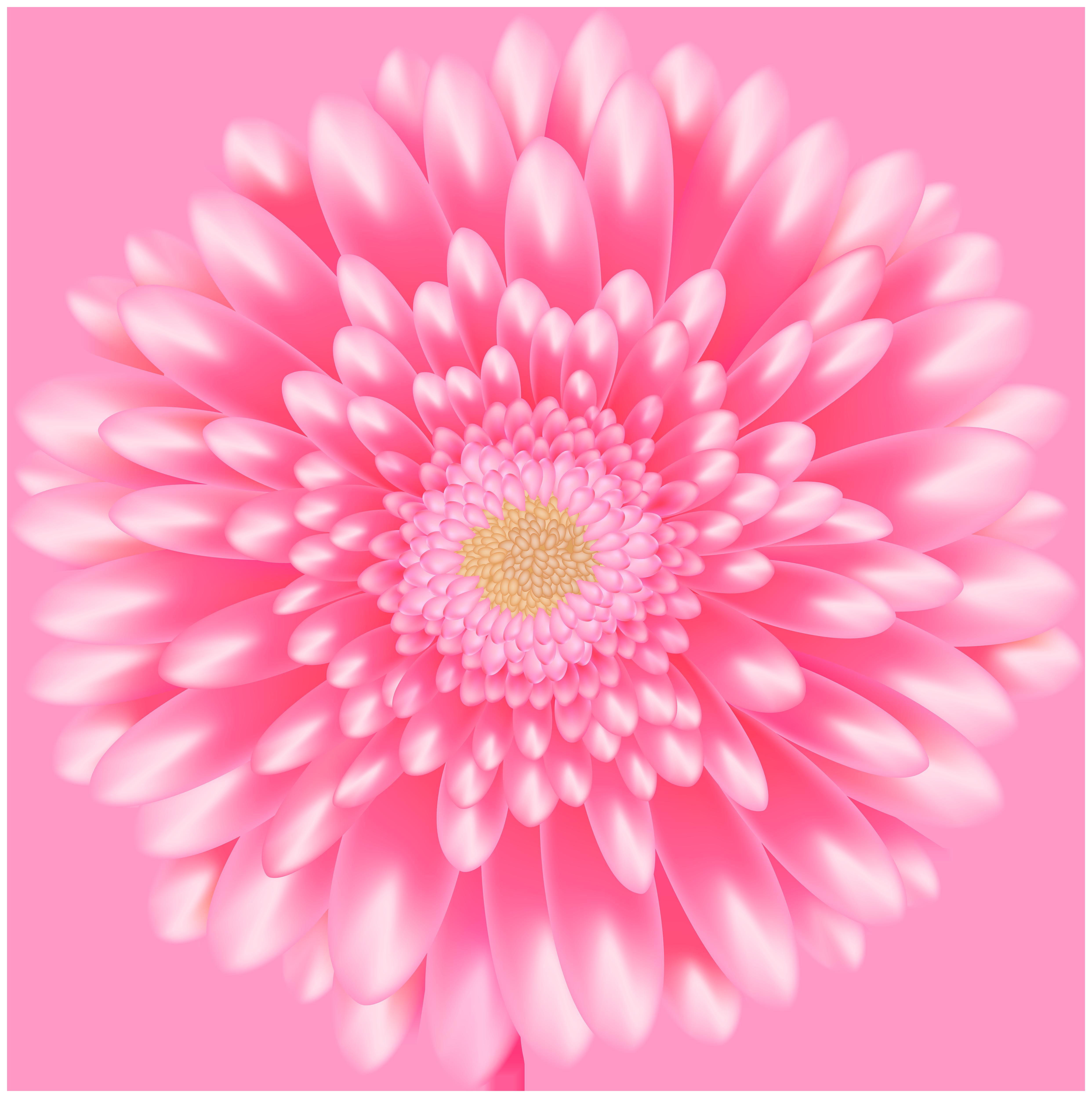 Flower Pink Transparent Clip Art Image.