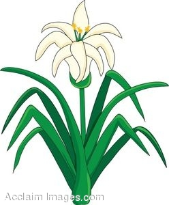 Clip Art of an Easter Lily Flower Plant.