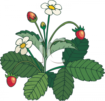 Clipart Picture Of A Strawberry Plant With Ripe Berries On It.