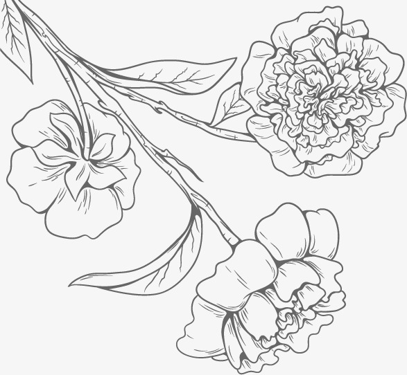 Fresh Flowers Vector Image, Black, Flowers, Line Drawing PNG and.