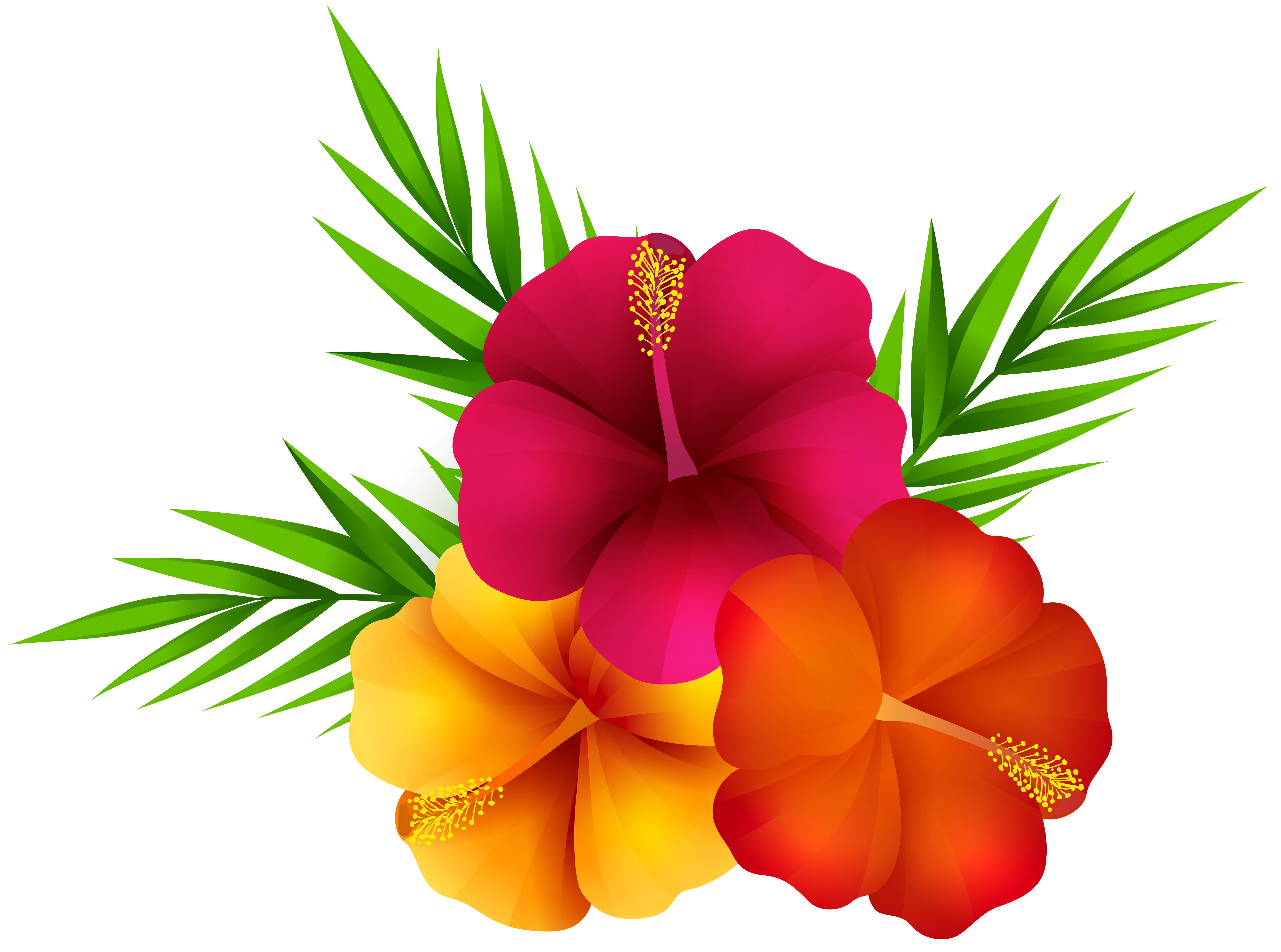 Exotic Flowers PNG Clip Art Image.