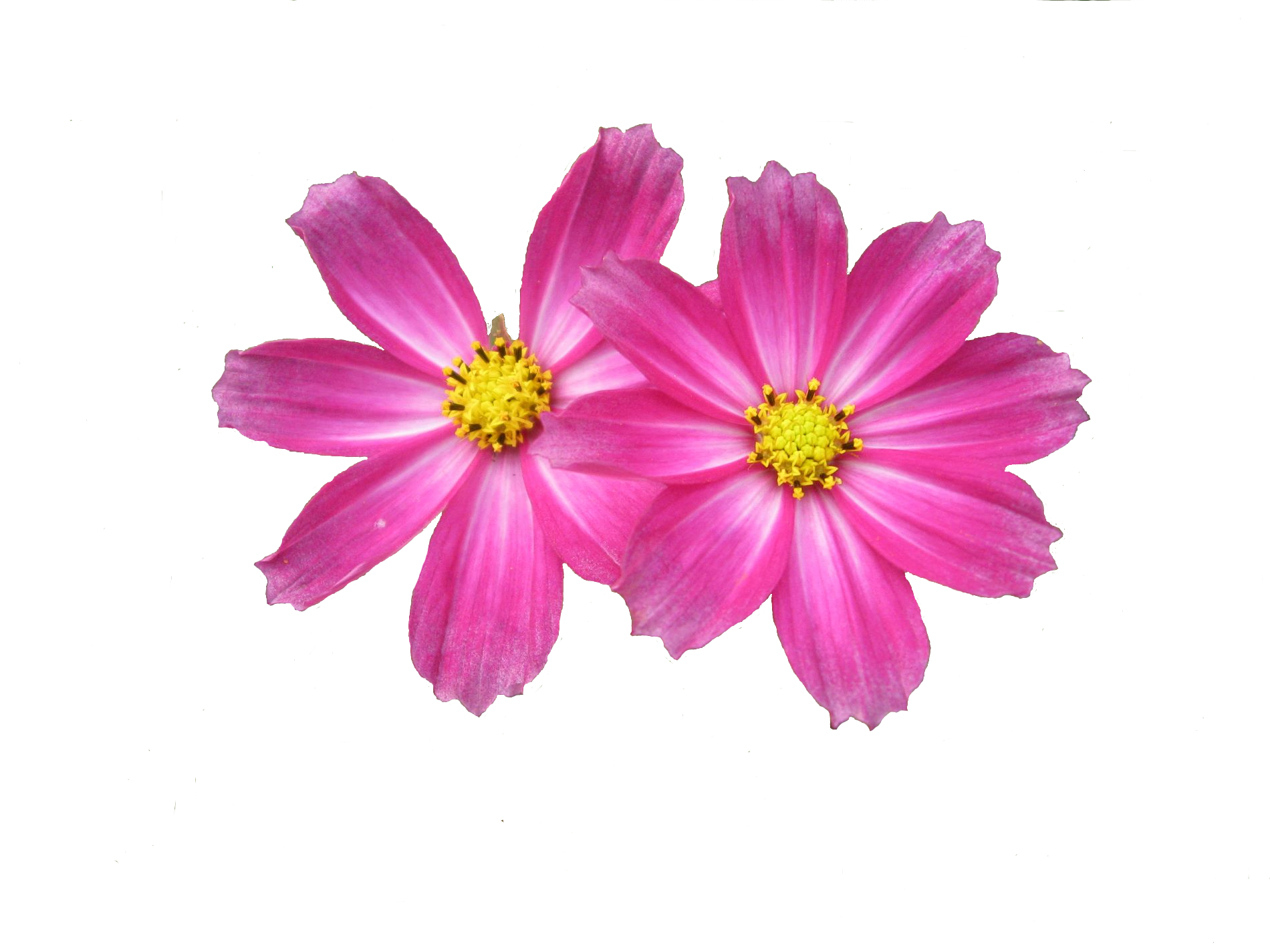 Free Download Flower Png Images #28706.