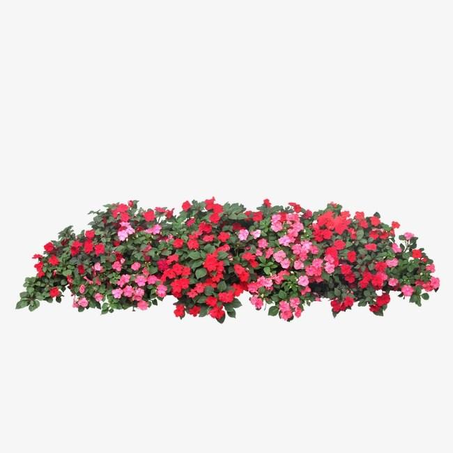 Flower png clipart for photoshop » Clipart Portal.