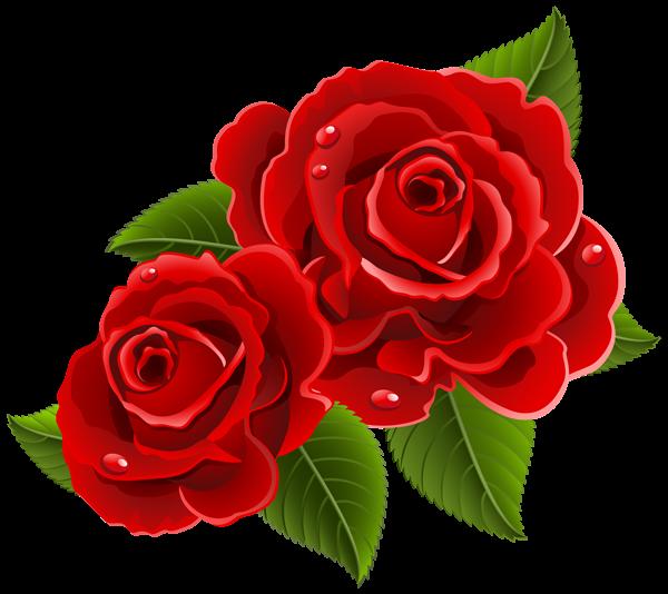 Rose PNG flower images, free download.