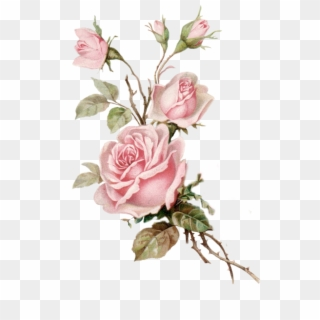 Free Rose PNG Images.