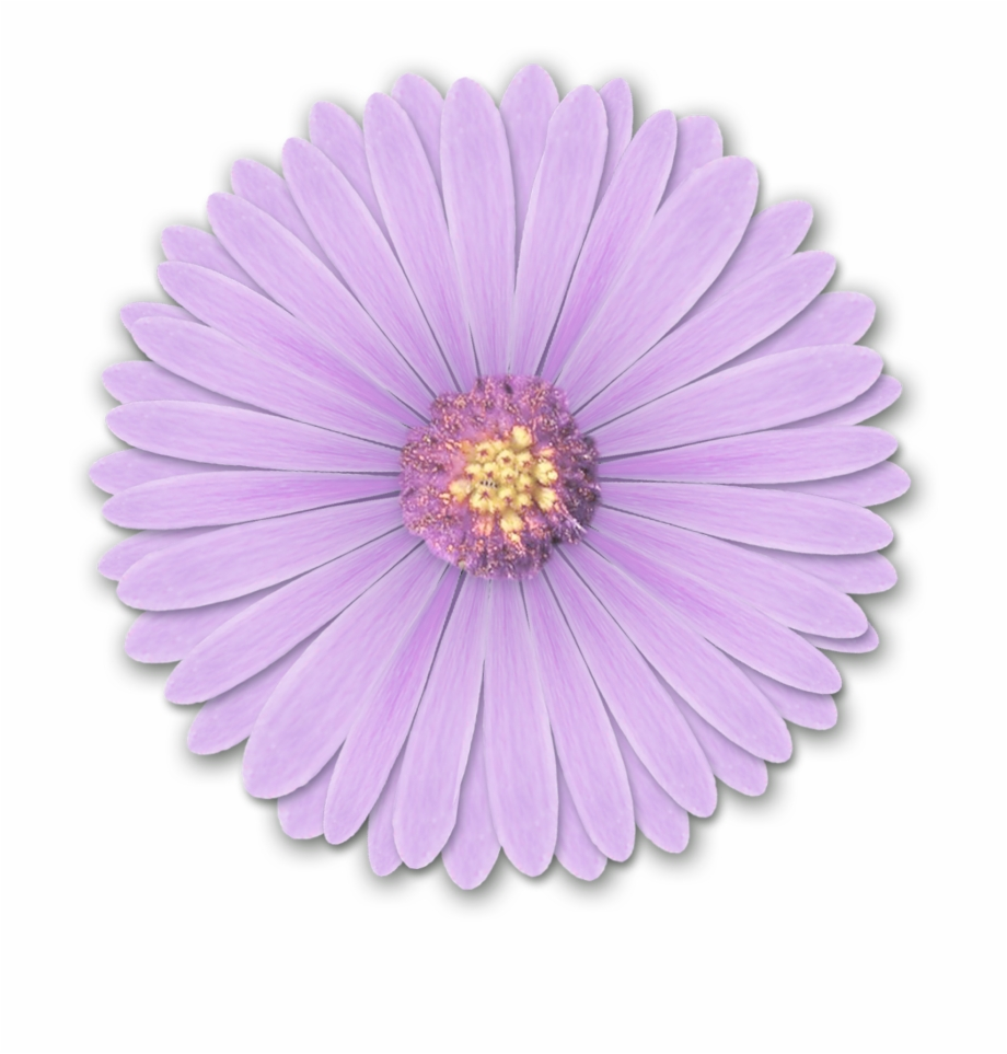 Realistic Flower Png.
