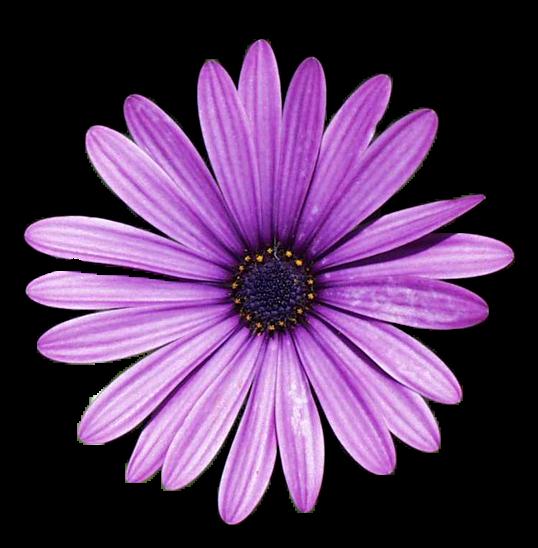 Brushes Pngs: Flower Pngs.