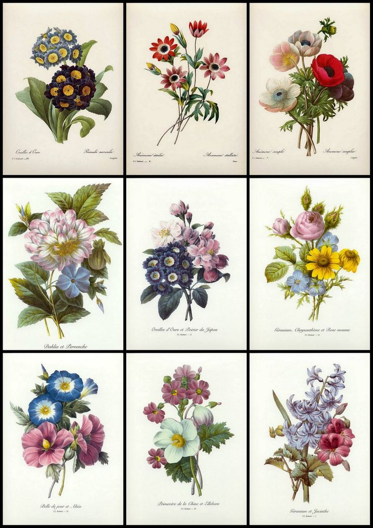 1000+ ideas about Vintage Flower Prints on Pinterest.