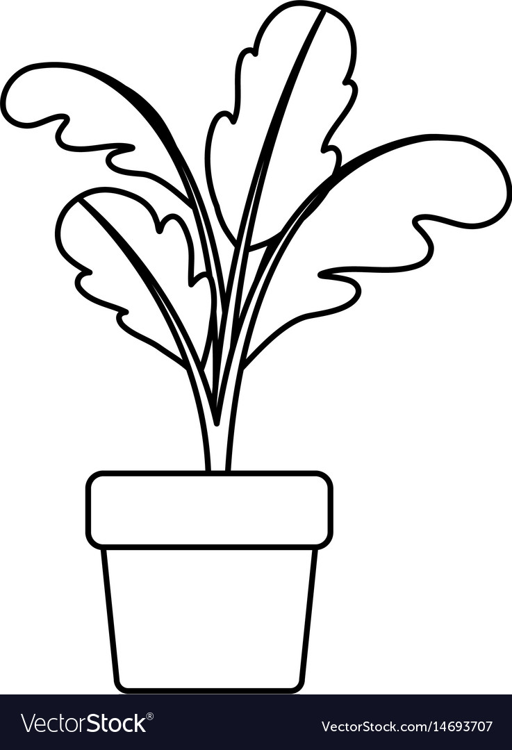 Black silhouette of beet plant in flower pot.