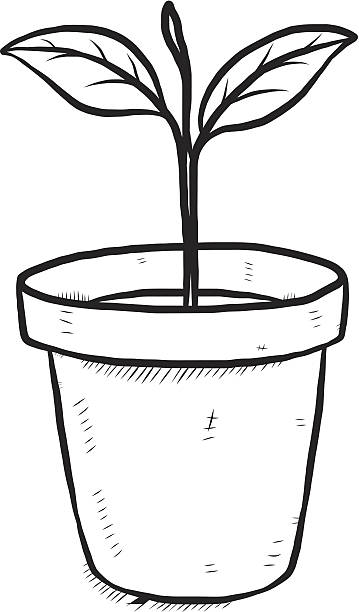 Flower In A Pot Clipart Black And White.