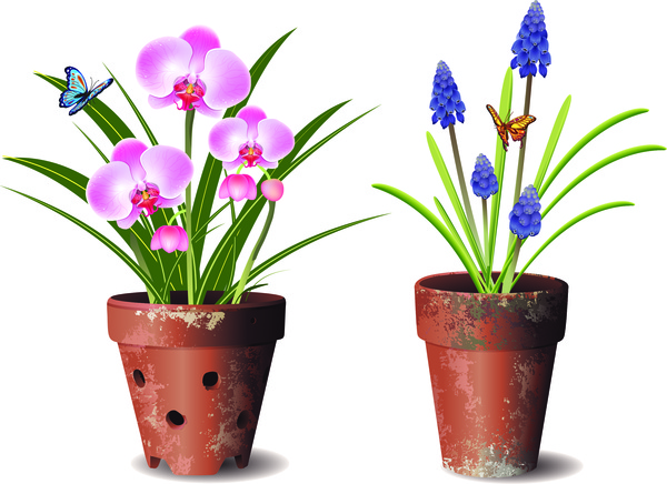 Orchids flower pot Free vector in Adobe Illustrator ai ( .ai.
