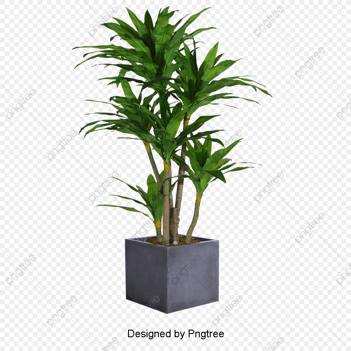 Plant, Gardening, Flower Pot PNG Transparent Clipart Image and PSD.