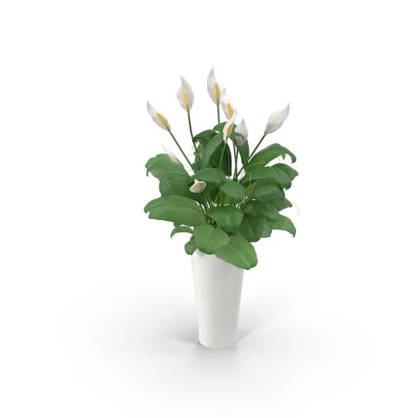 Flower Pot PNG Images & PSDs for Download.