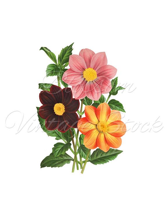 Floral Print, Botanical Flower Print, Clipart, Flower PNG.