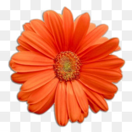 Real Flowers PNG.
