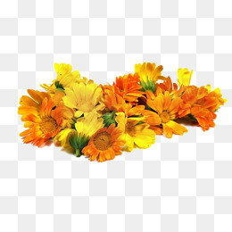 Real Flower PNG Images.