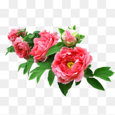 Download Free png Real Flower PNG Images.