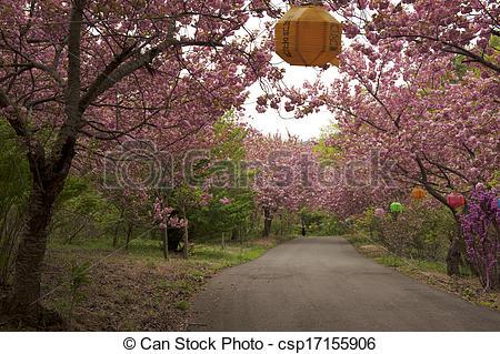 Stock Photography of Beautiful Flower road in south korea,Seosan.