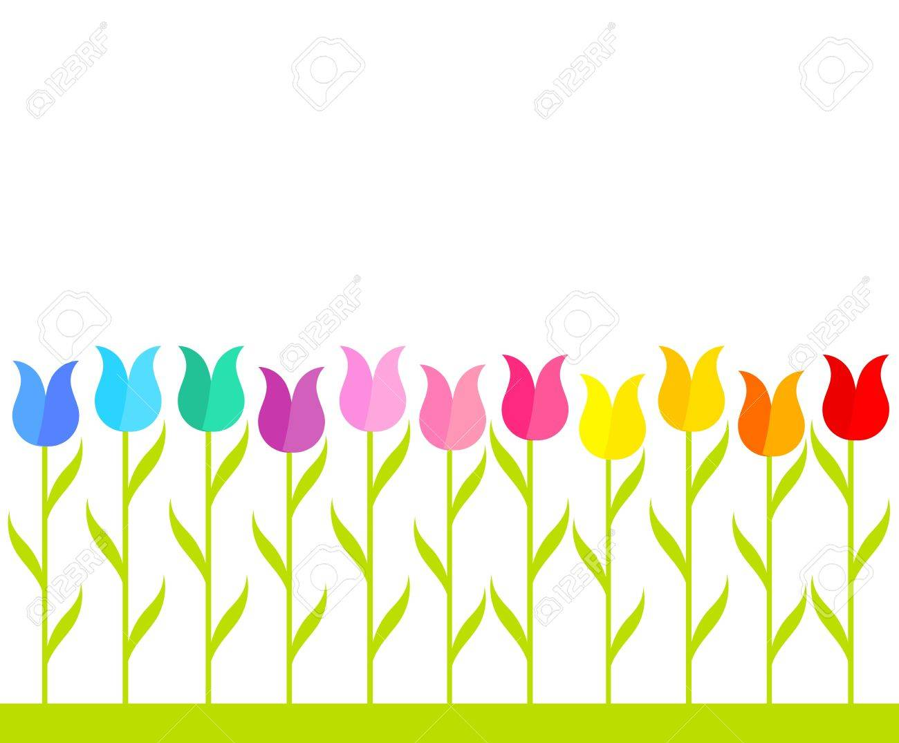 Row of multicolor tulip flowers. Vector illustration.