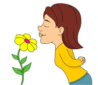 Gallery For > Flower Scent Clipart.