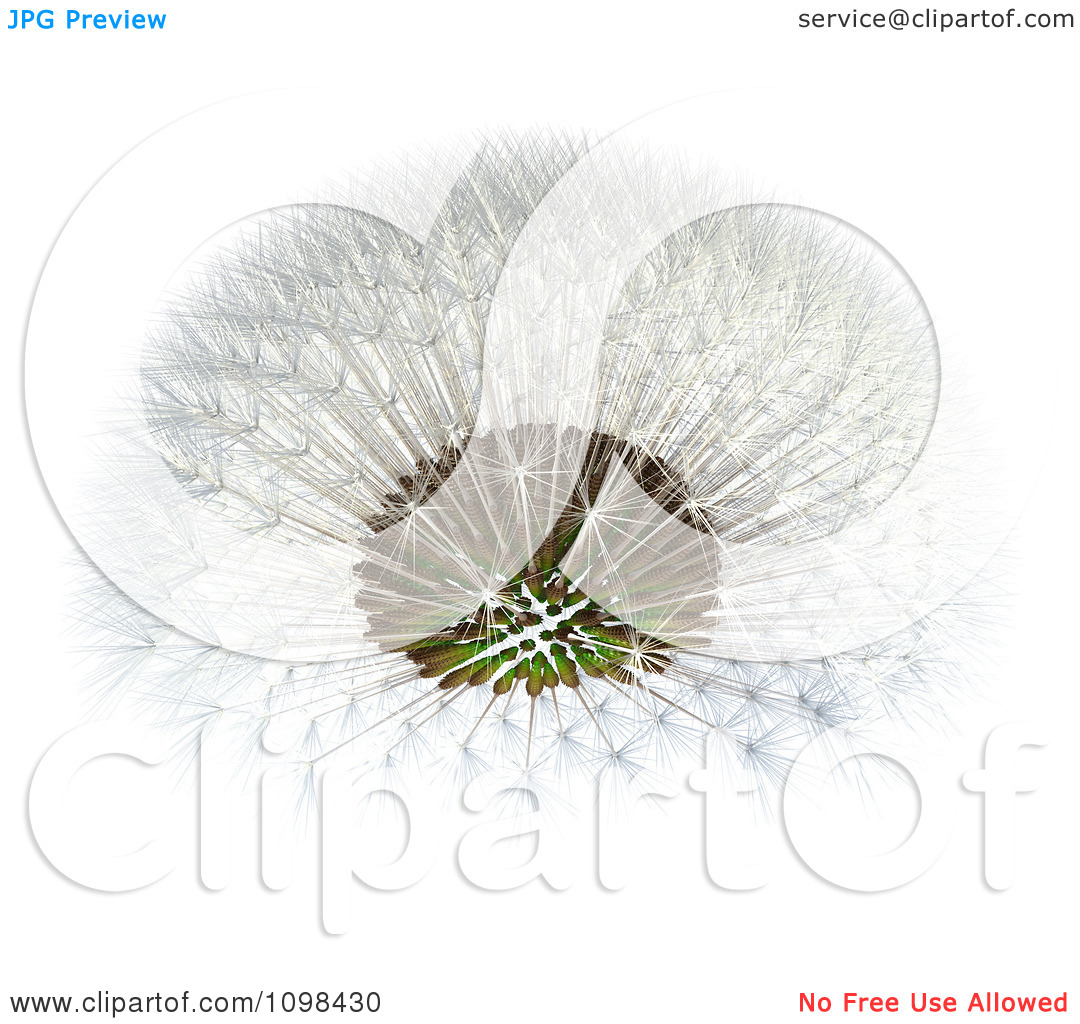 Clipart 3d Dandelion Seed Head Shown With A Fibonacci Sequence.