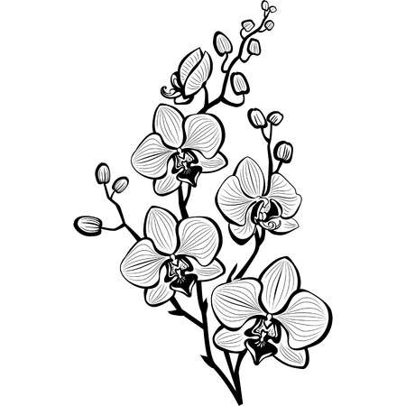 202,076 Flower Sketch Stock Illustrations, Cliparts And Royalty Free.