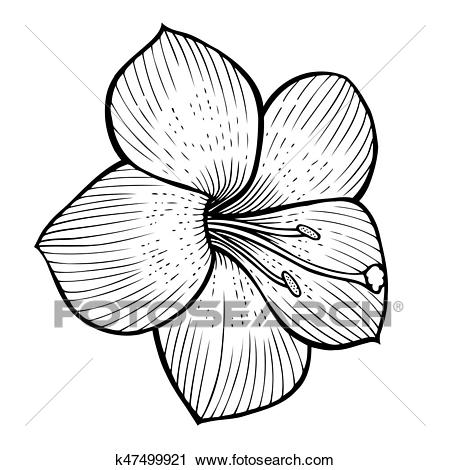 Flowers sketch image Clipart.
