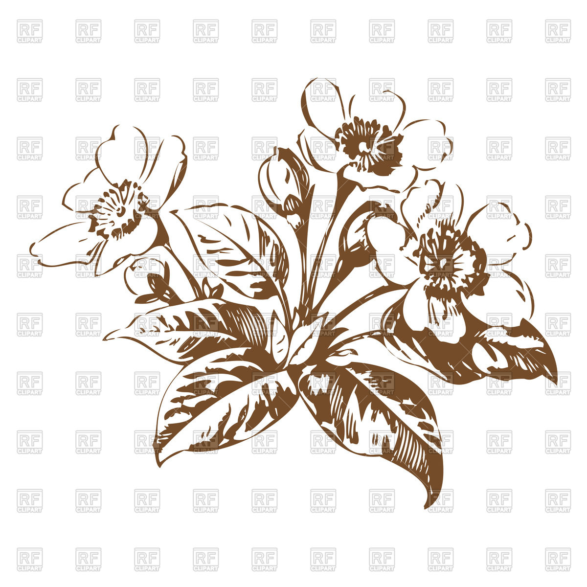 Cherry blossom flowers sketch Stock Vector Image.