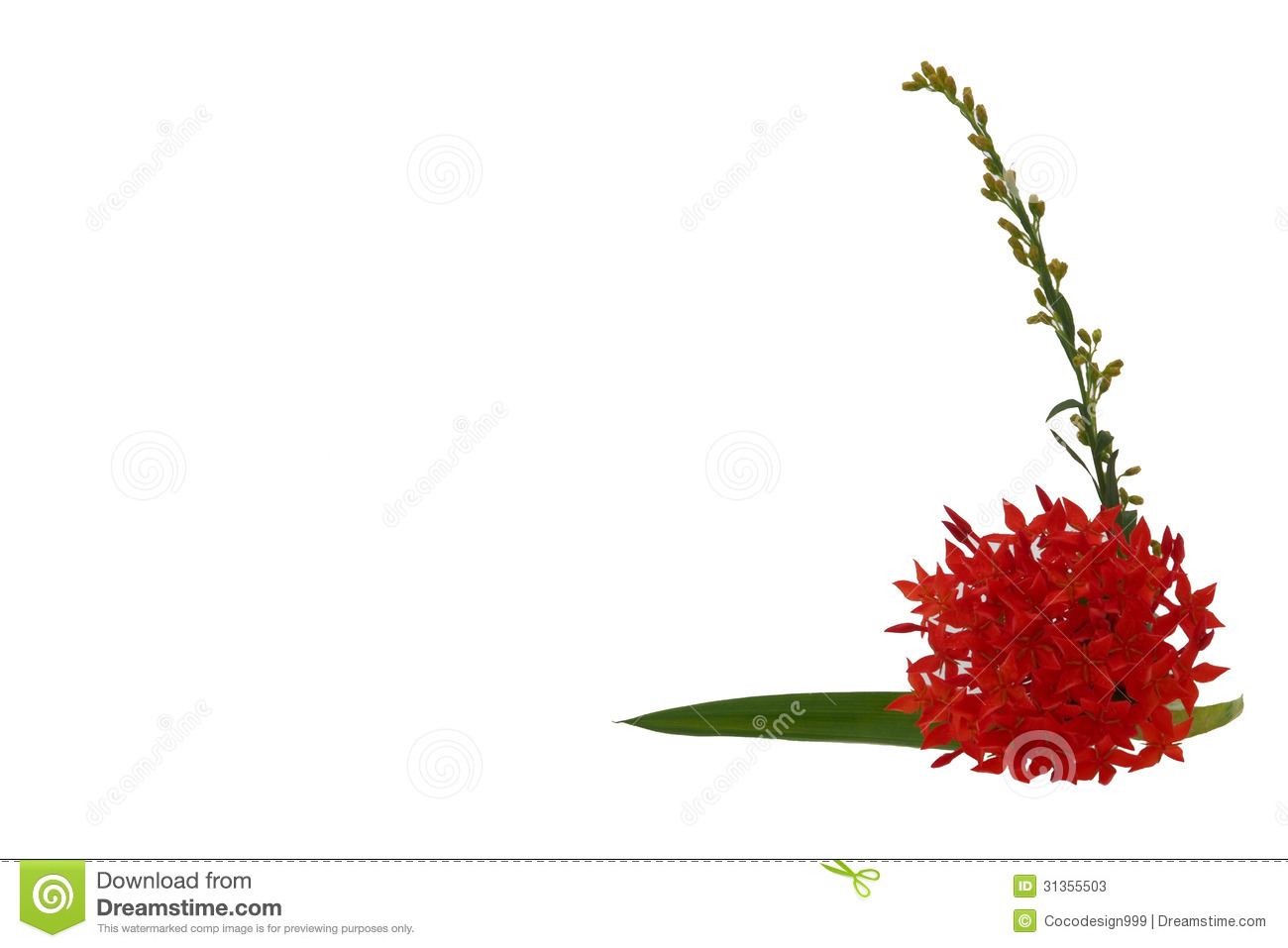 Flower Spike Stock Photos.