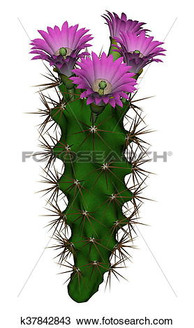 Drawing of Cactus with flowers.